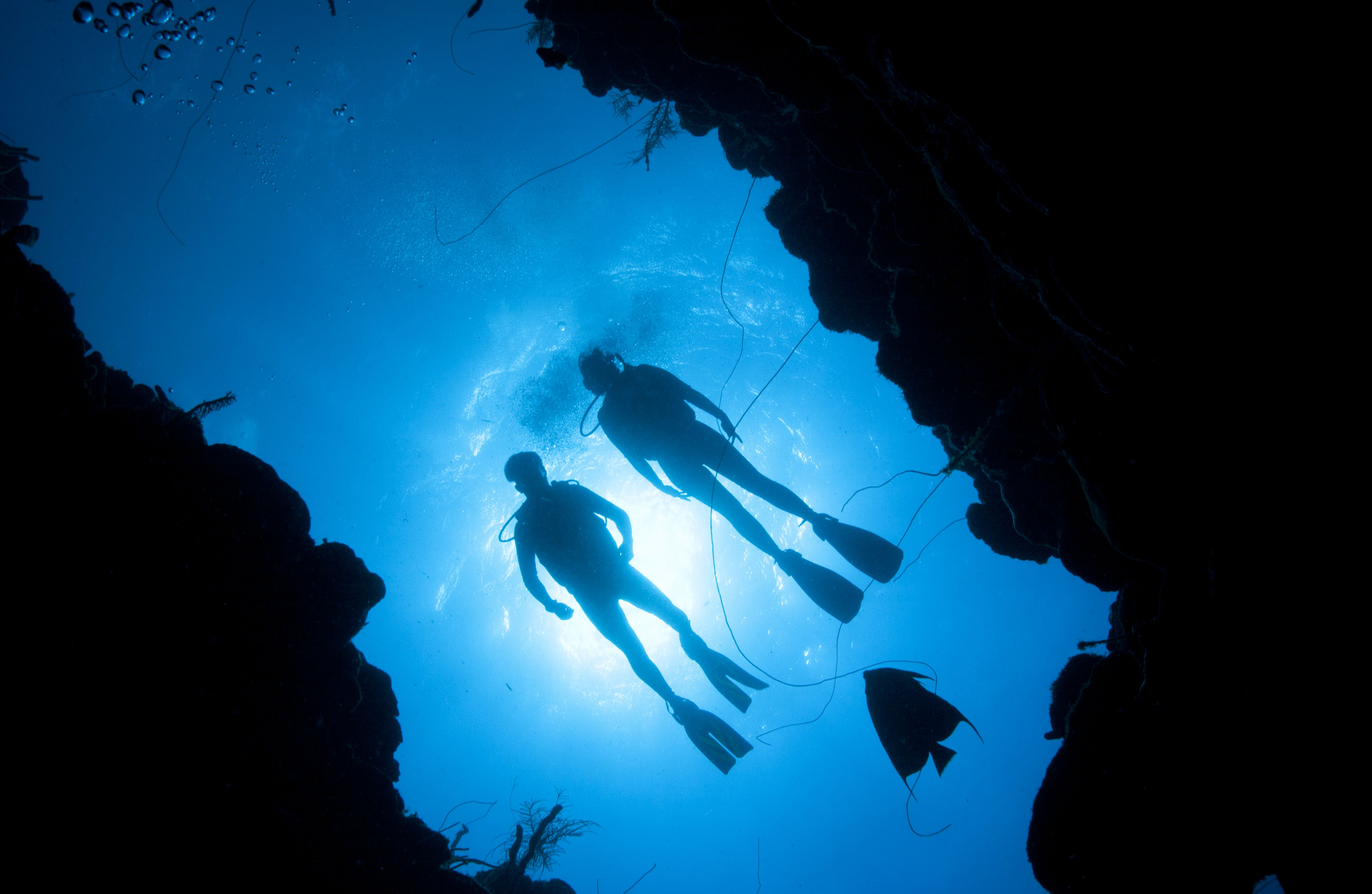 Silhouette of divers and angelfish