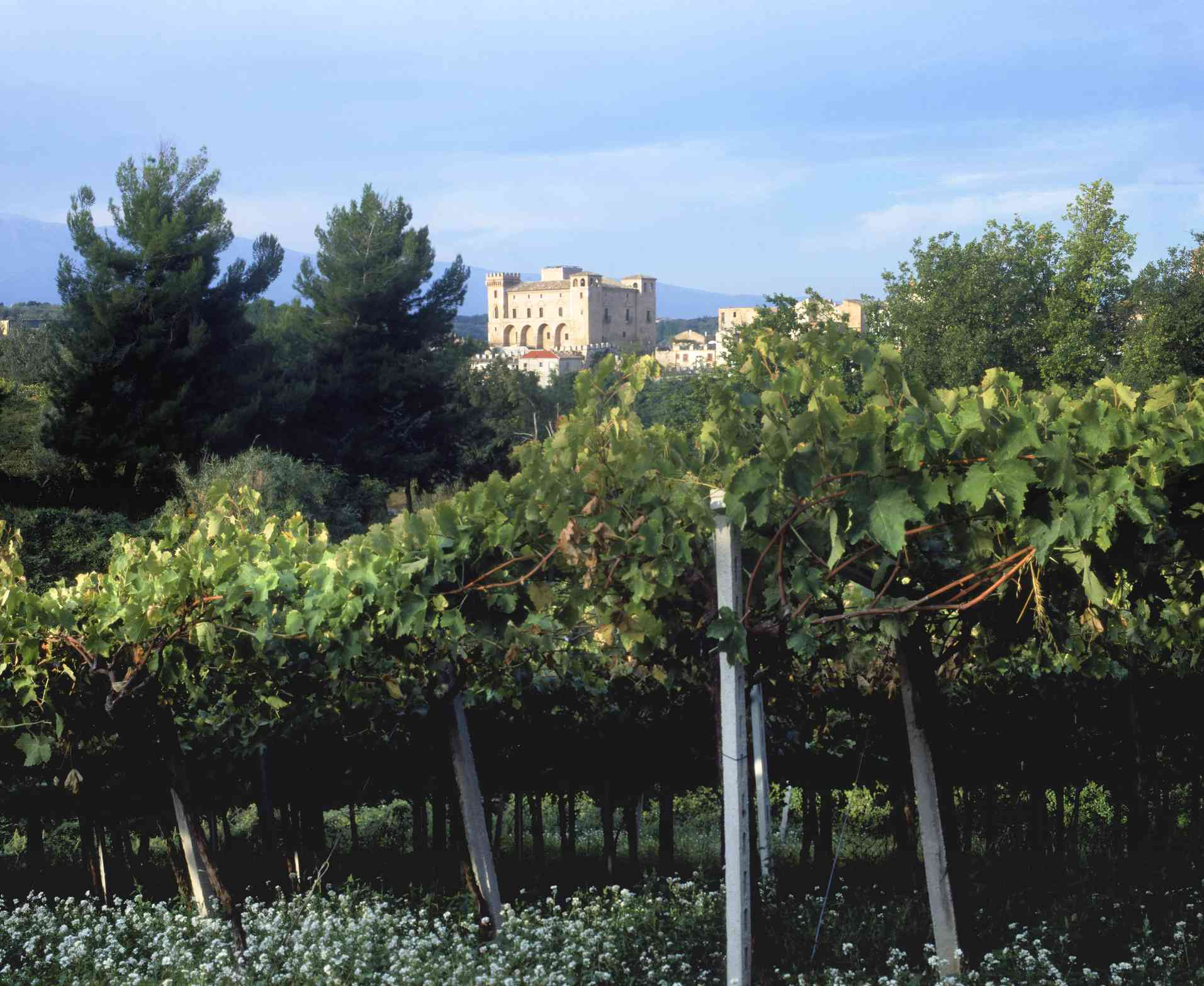 Castle of Montepulicano d'Abruzzo with vineyard