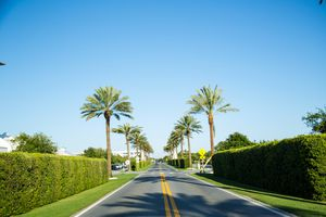Empty road at Alys Beach with hedges and pamtrimes on either side of the road