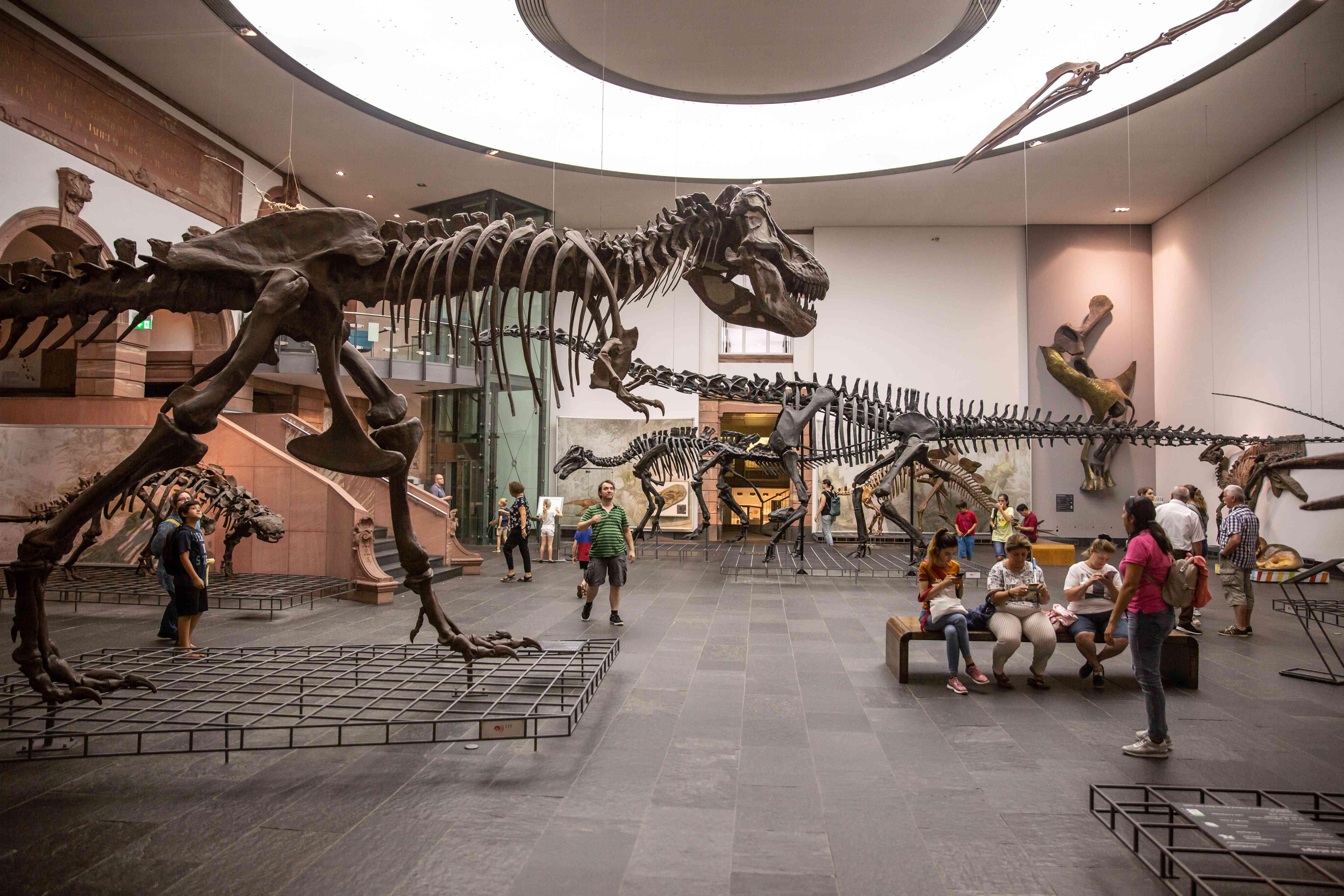 Dinosaur skeletons at the Senckenberg Museum