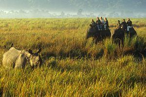 Kaziranga National Park, Assam.