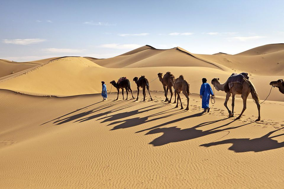 Morocco, Erg Chigaga sand dunes, camel caravan