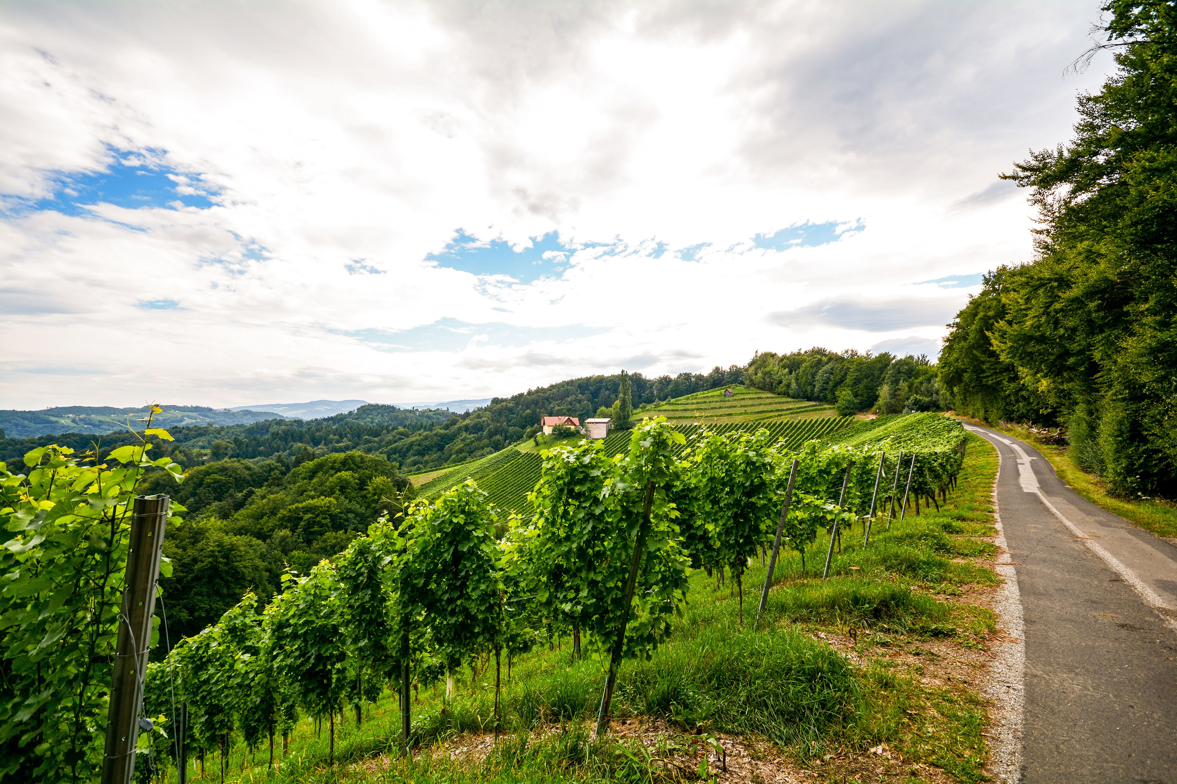 Vineyards along the South Styrian Wine Road in autumn, Austria