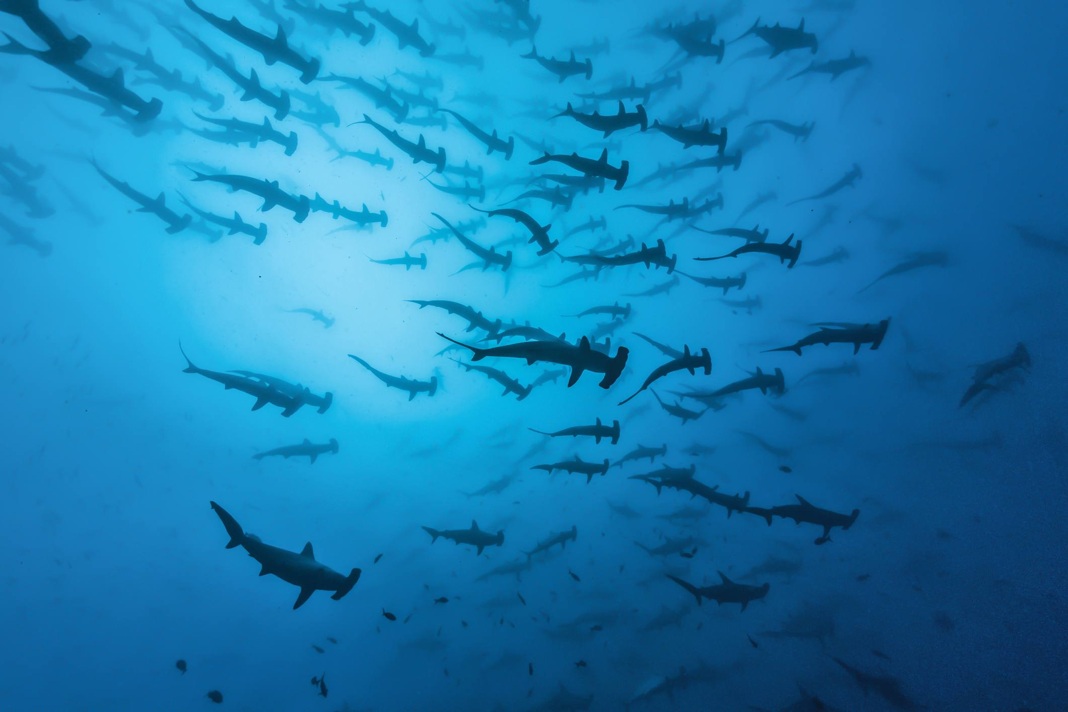 The Top Four Scuba Diving Sites in Costa Rica