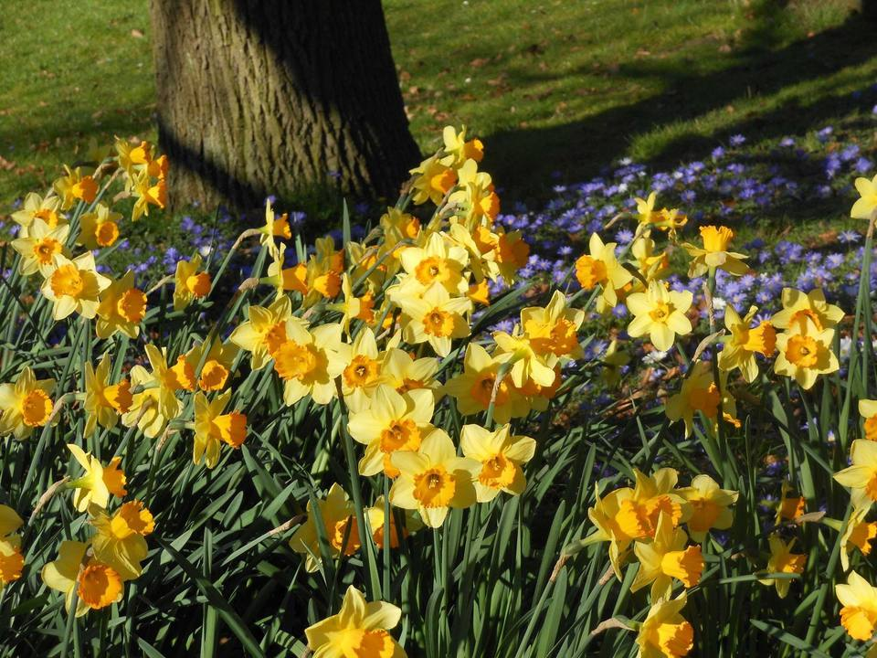 20 top things to do over easter weekend in the uk celebrate spring with a long easter weekend in the uk there are loads of things to do all over the country and in england wales and northern ireland negle Images