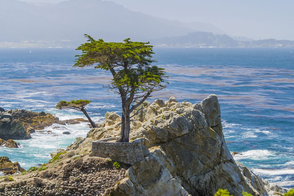 Lone Cypress, Pebble Beach, CA