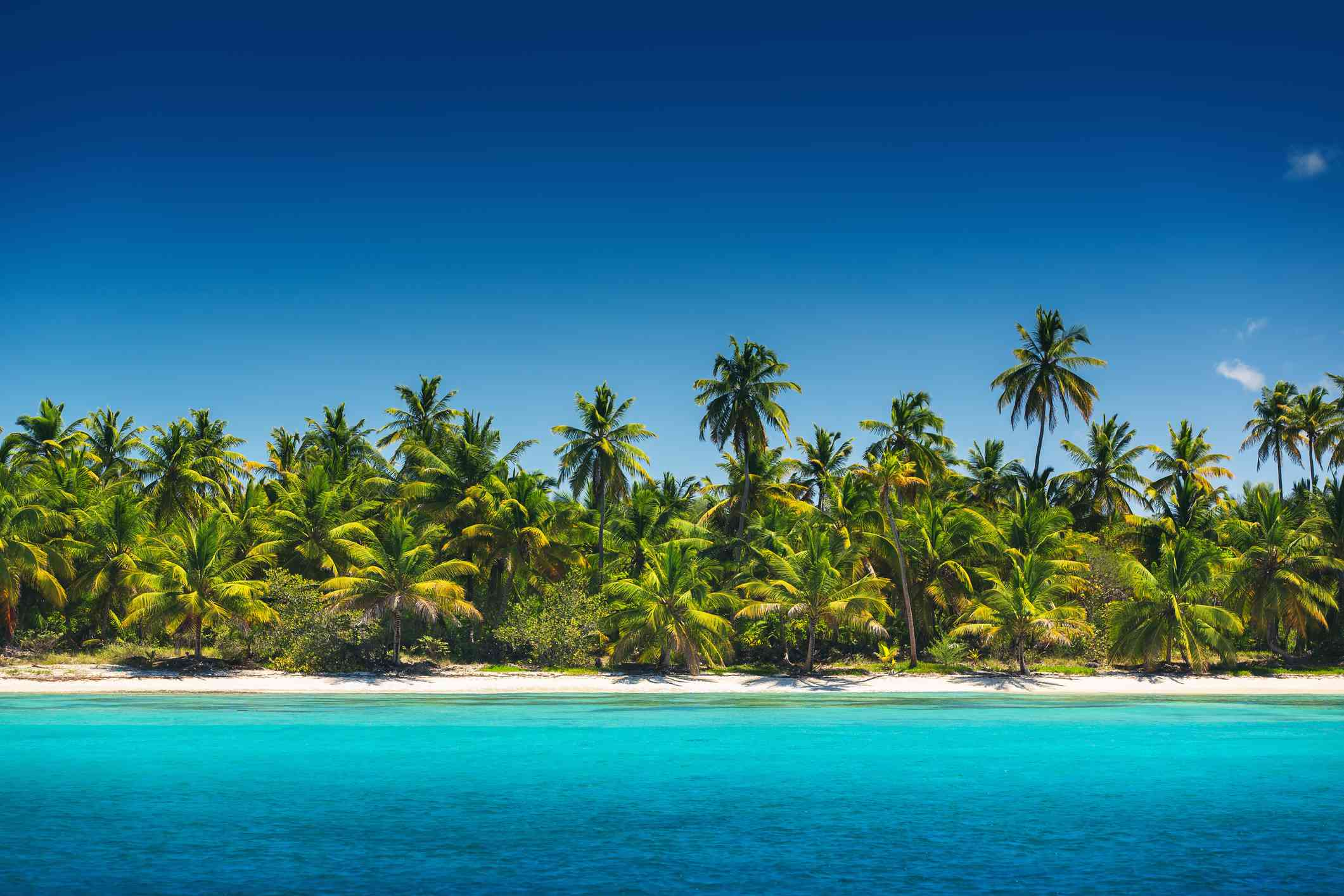 Palm trees on the tropical beach, Saona Island, Dominican Republ