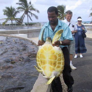 Grand Cayman Island Turtle Farm
