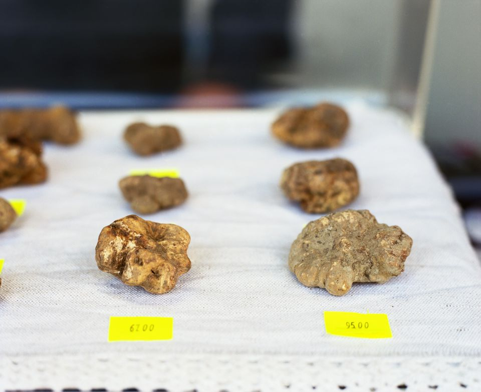 White truffles for sale at an Italian festival