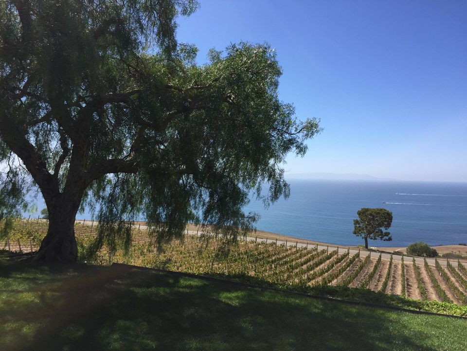 Terranea Catalina Vineyard