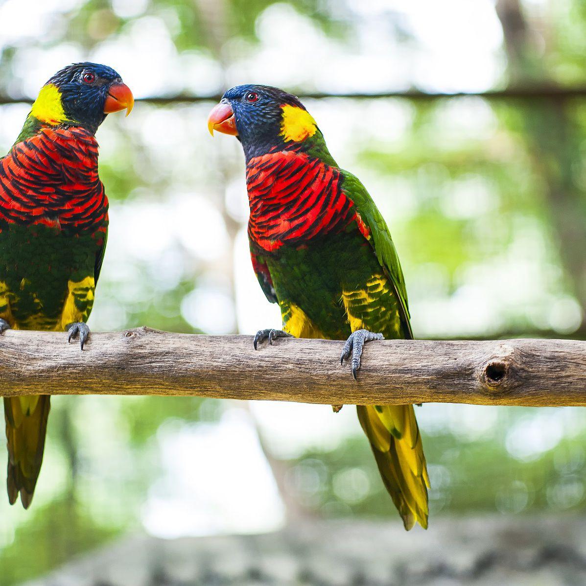 Visiting Kuala Lumpur S Beautiful Kl Bird Park