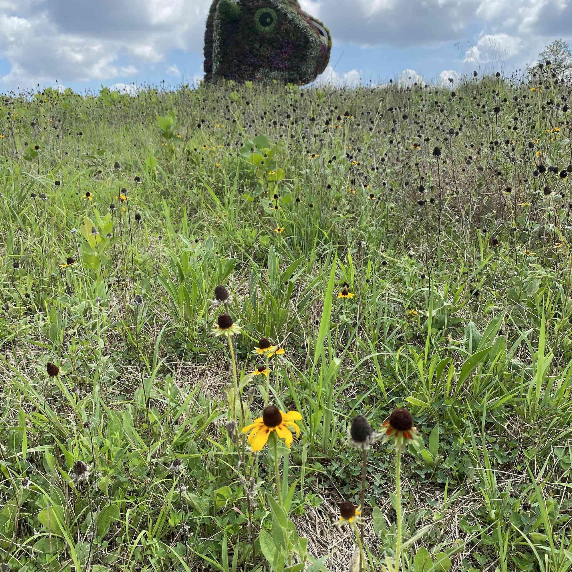 head of cartoonish dinosaur topiary seen above tall grass