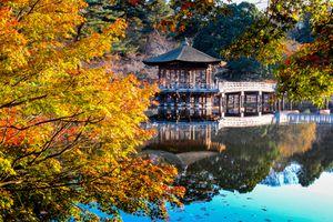 Late autumn, early morning of Nara Park, Ukimi-Do.