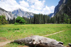 Grassy field in Yosemite