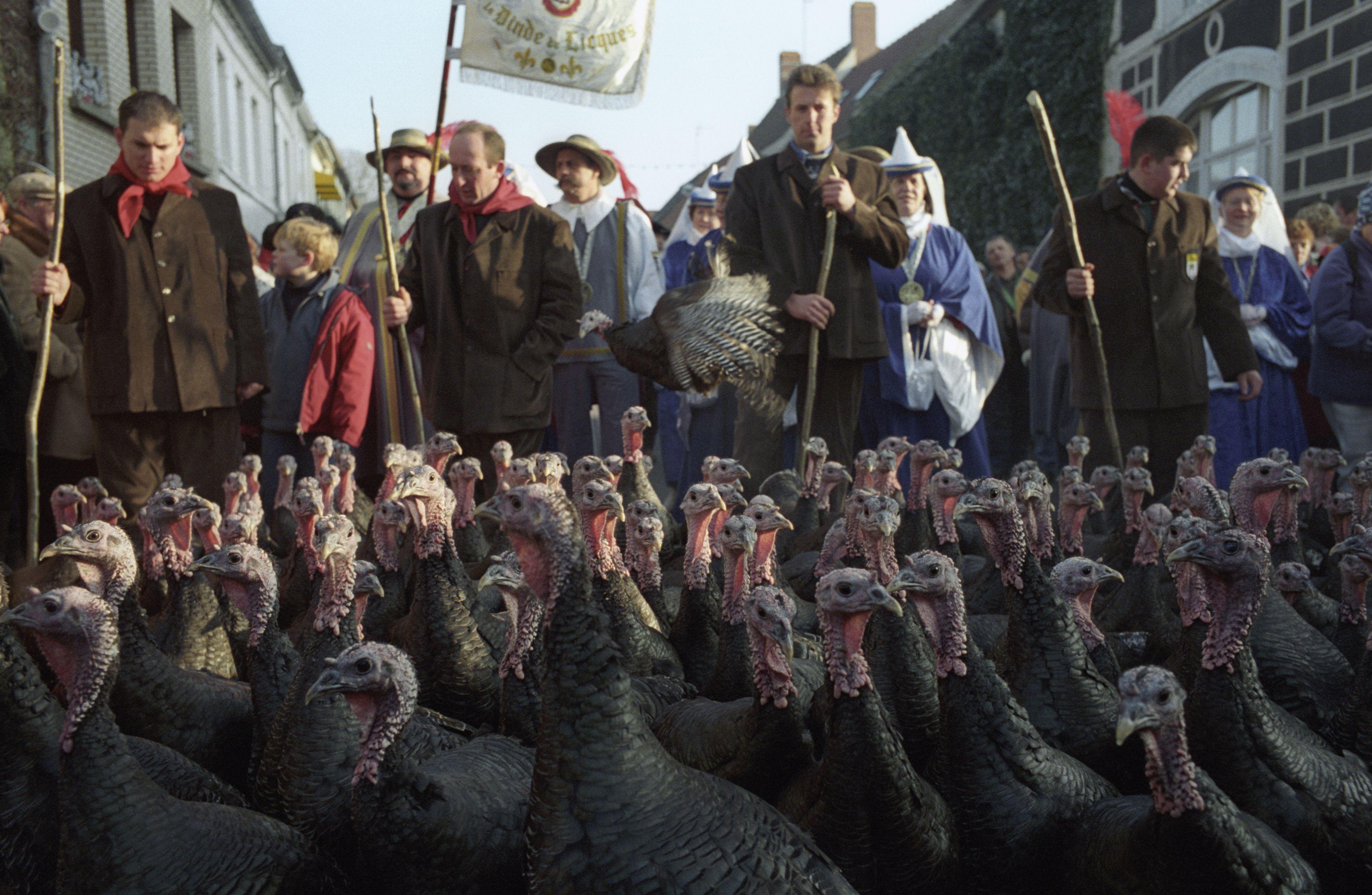 Licques Turkey Festival