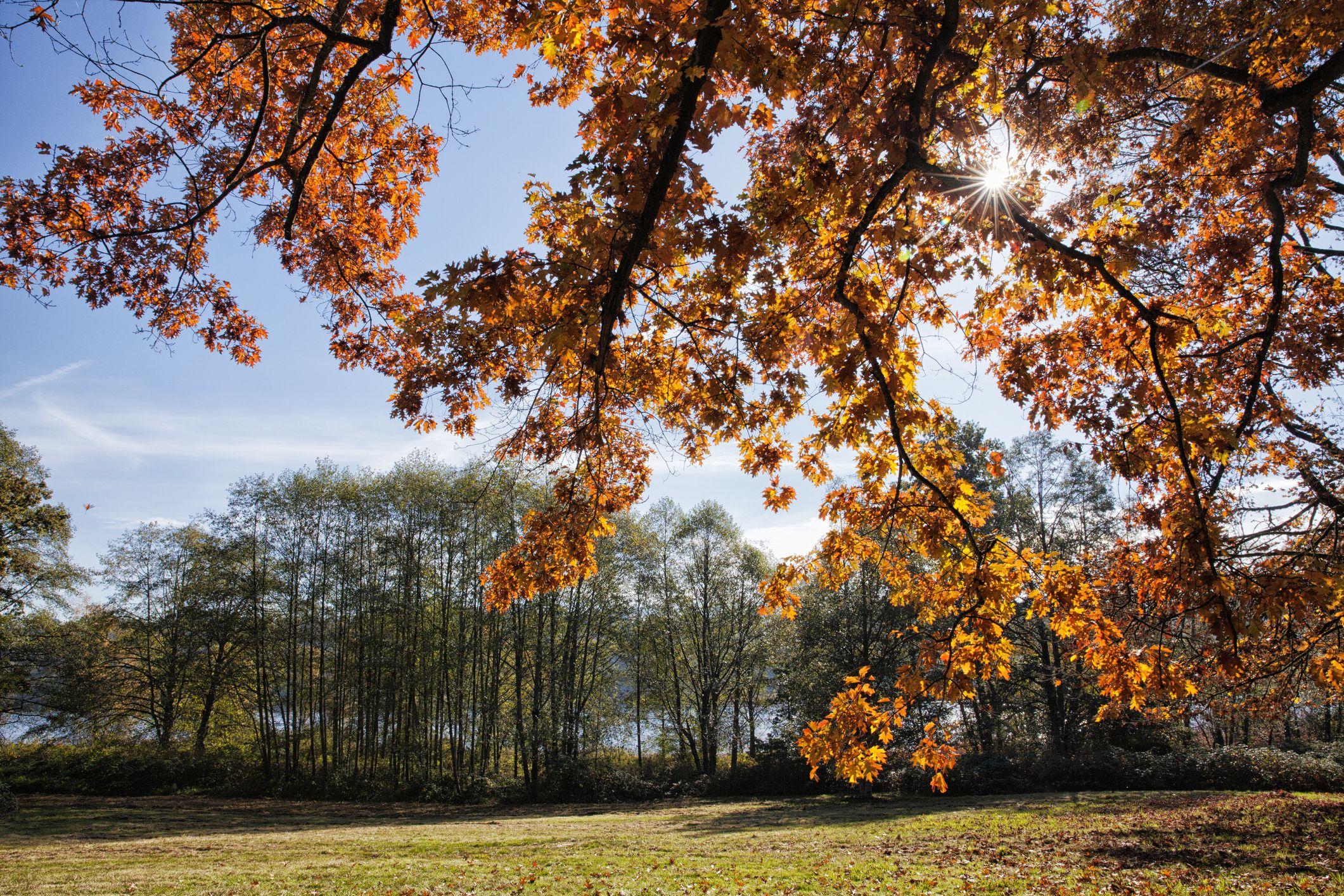 Deer Lake Park in autumn, Burnaby, British Cloumbia