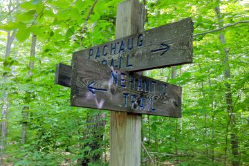 Trail markers in Pachaug Forest in Connecticut