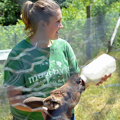 Baby Moose Drinking a Bottle