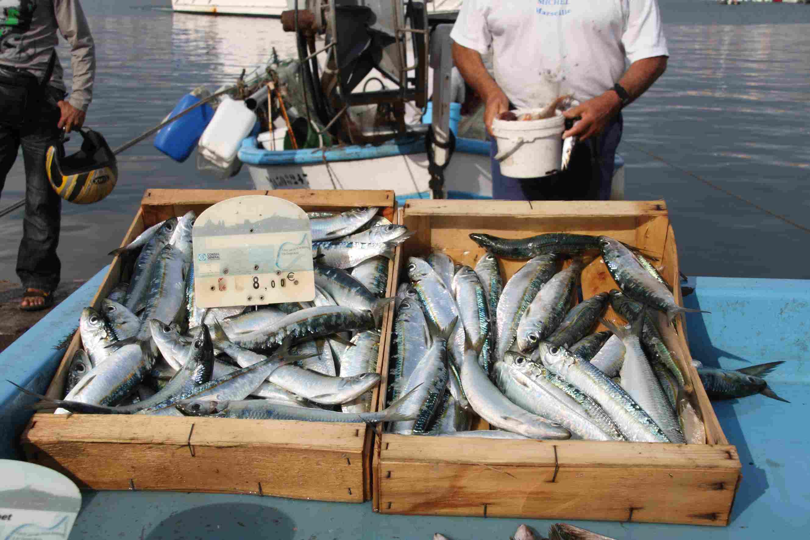 The daily fish market