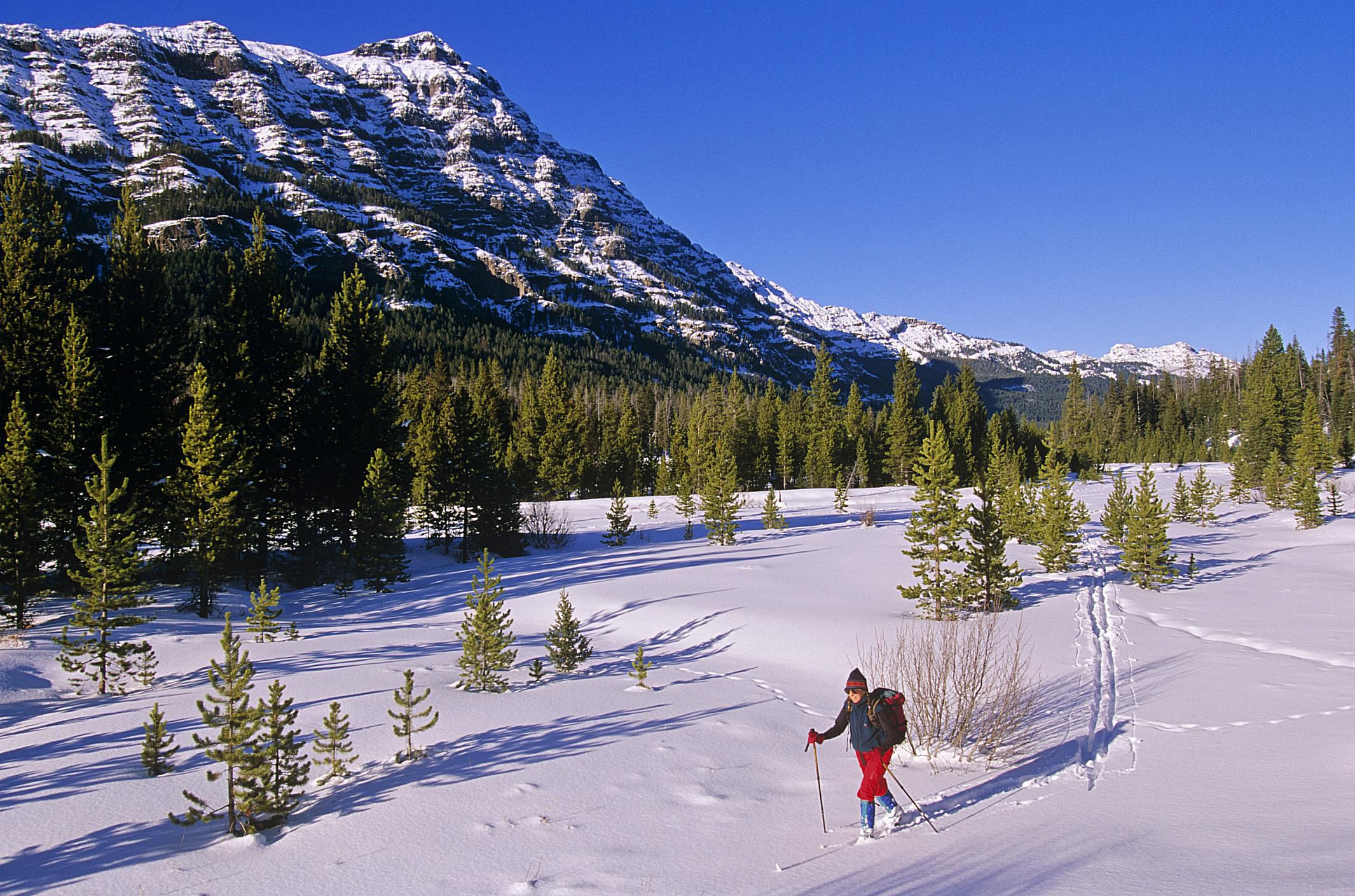 10 Reasons To Visit Yellowstone National Park In Winter
