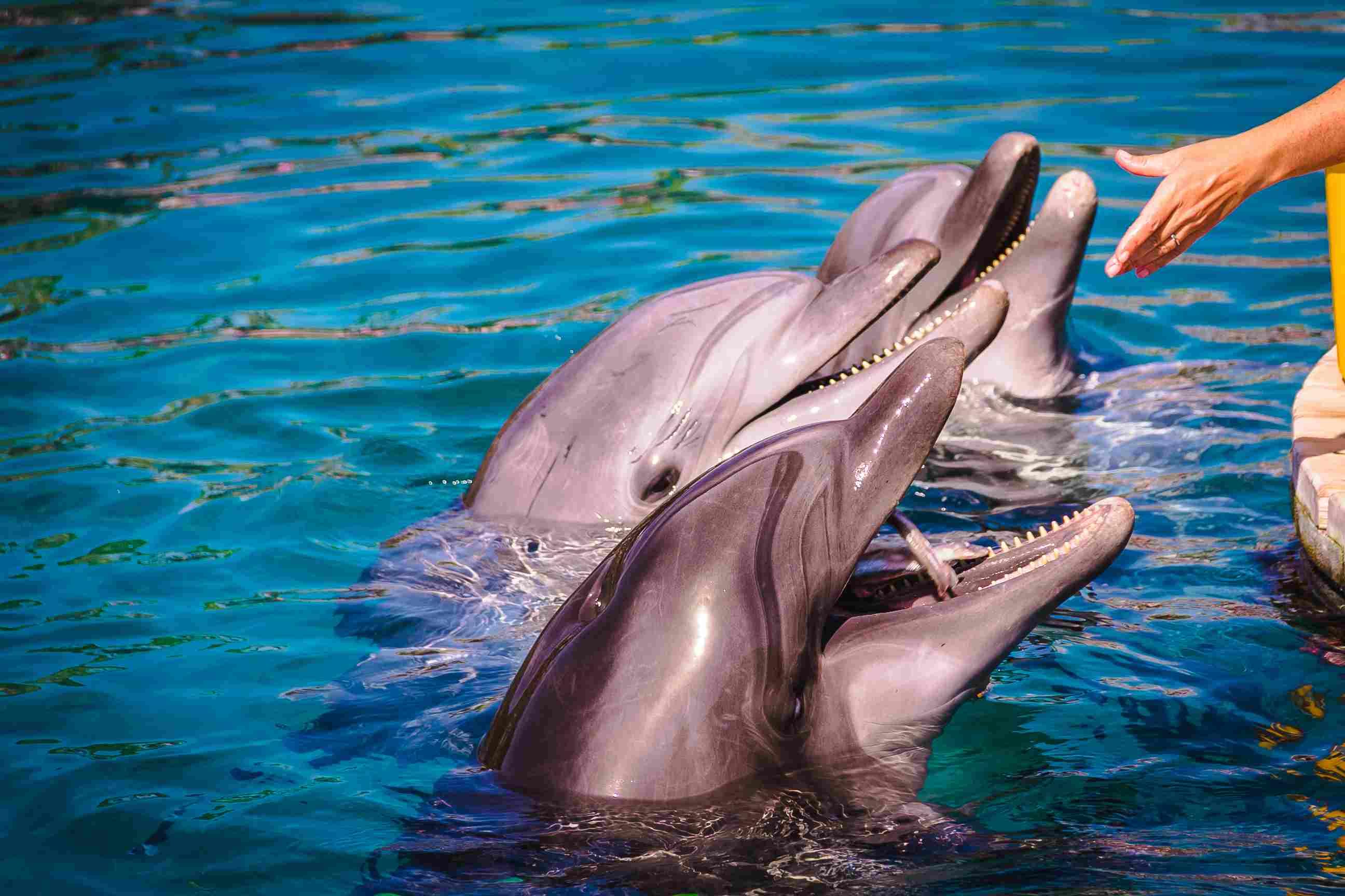 Sochi Dolphins