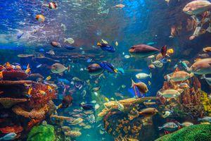 Tropical aquarium with fish