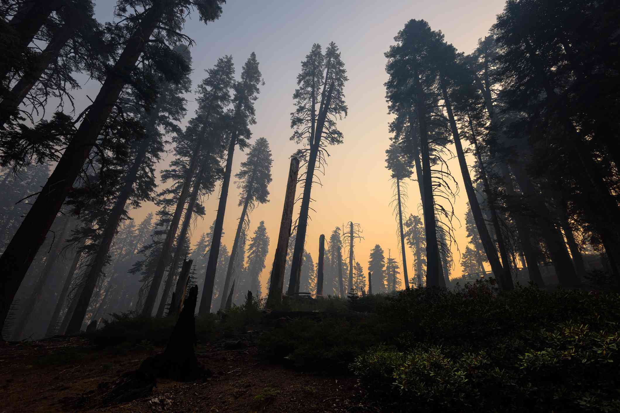 Kings Canyon National Park after a forest fire, Hume, California, America, USA