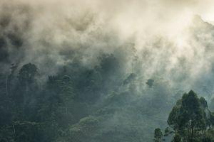 Mists rising over Bwindi Impenetrable Forest, Uganda