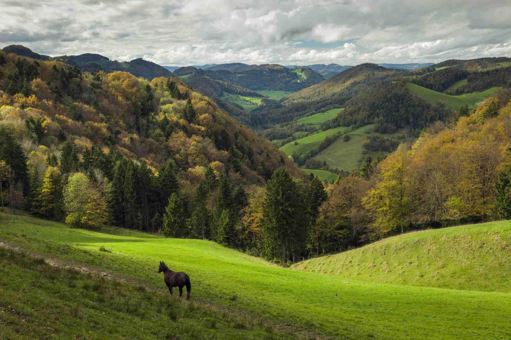 A horse stands among lush green hills
