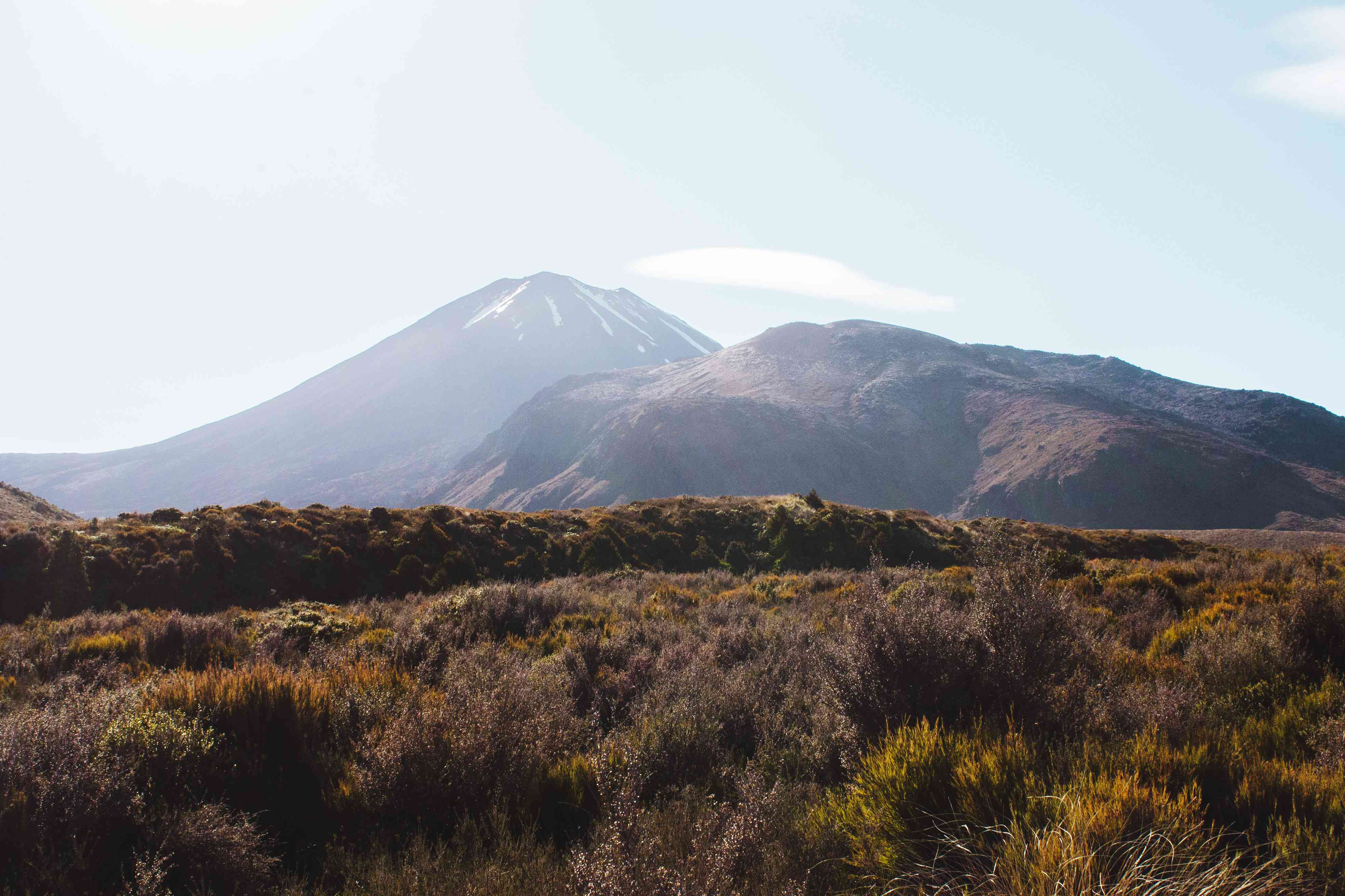 Un camino de tierra a través de viñedos en la isla Waiheke