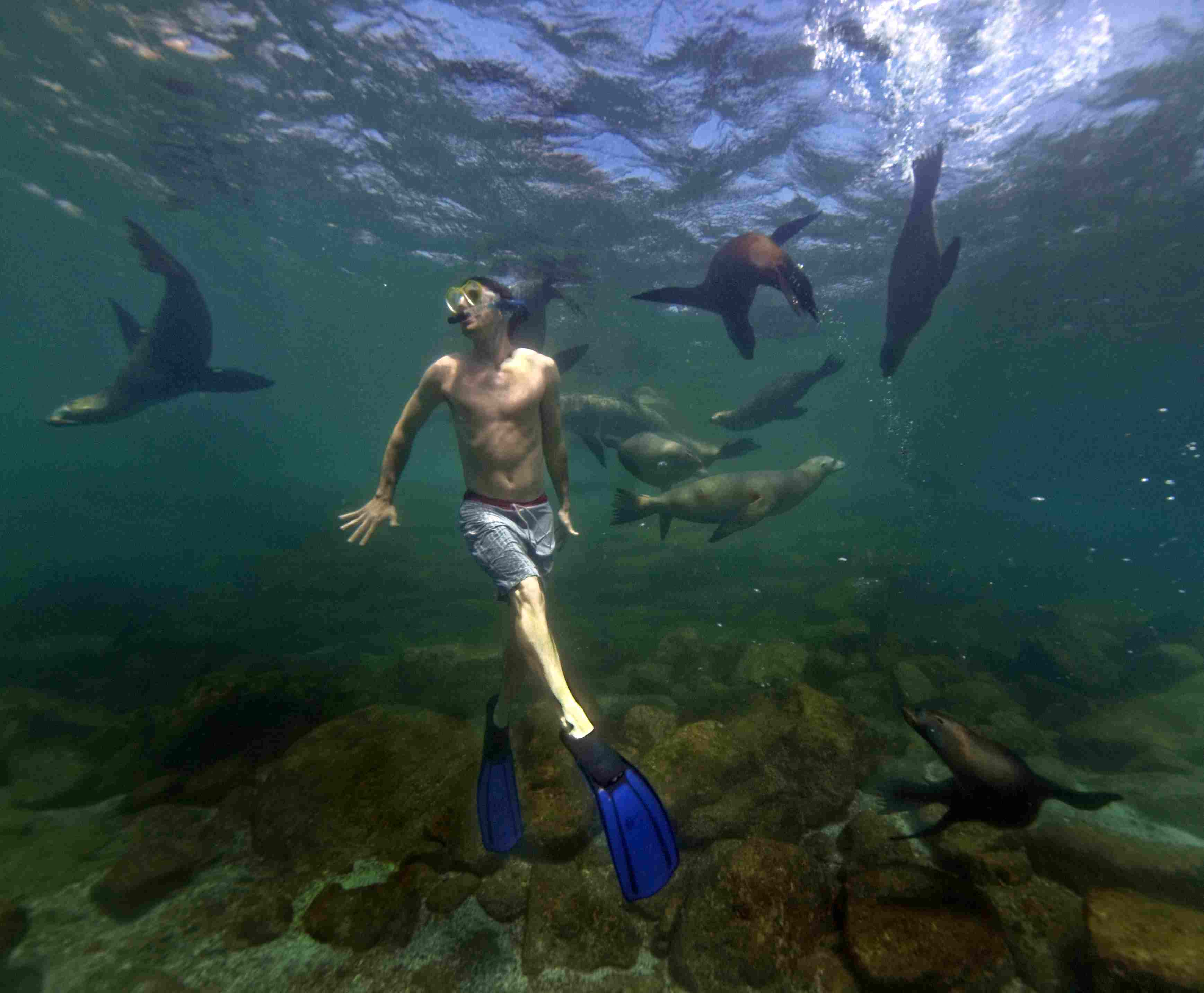 Diving in Baja with sea lions