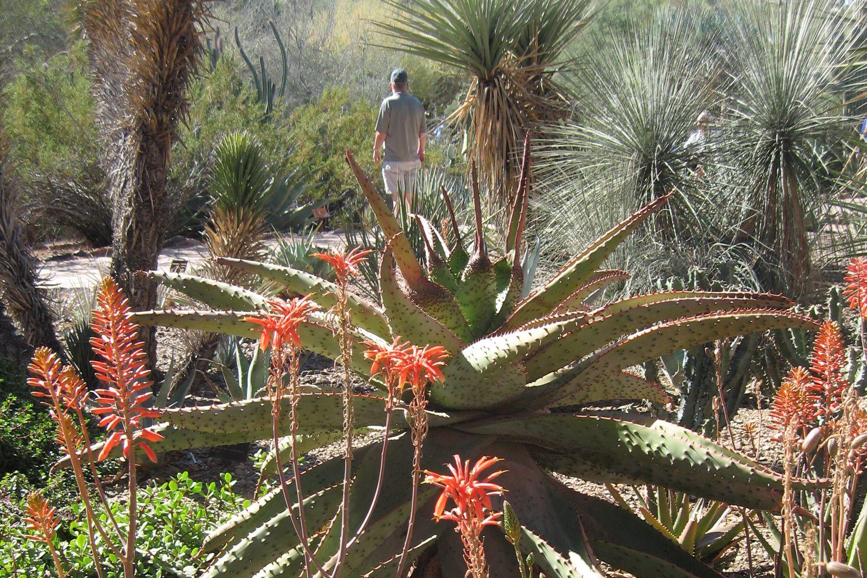Luxury Phoenix Botanical Gardens Image Collection - Brown Nature ...