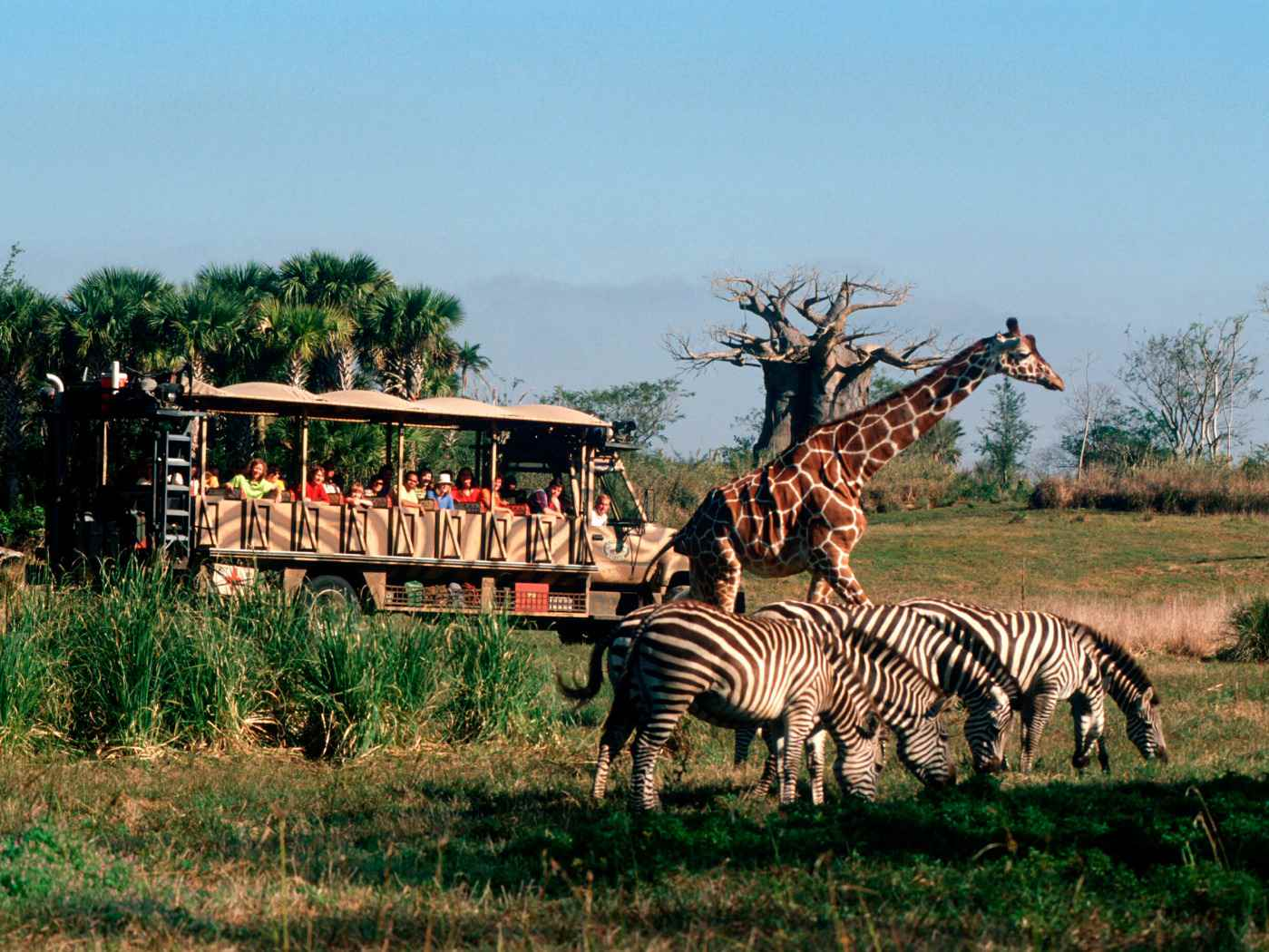 Animal Kingdom Kilimanjaro Safaris