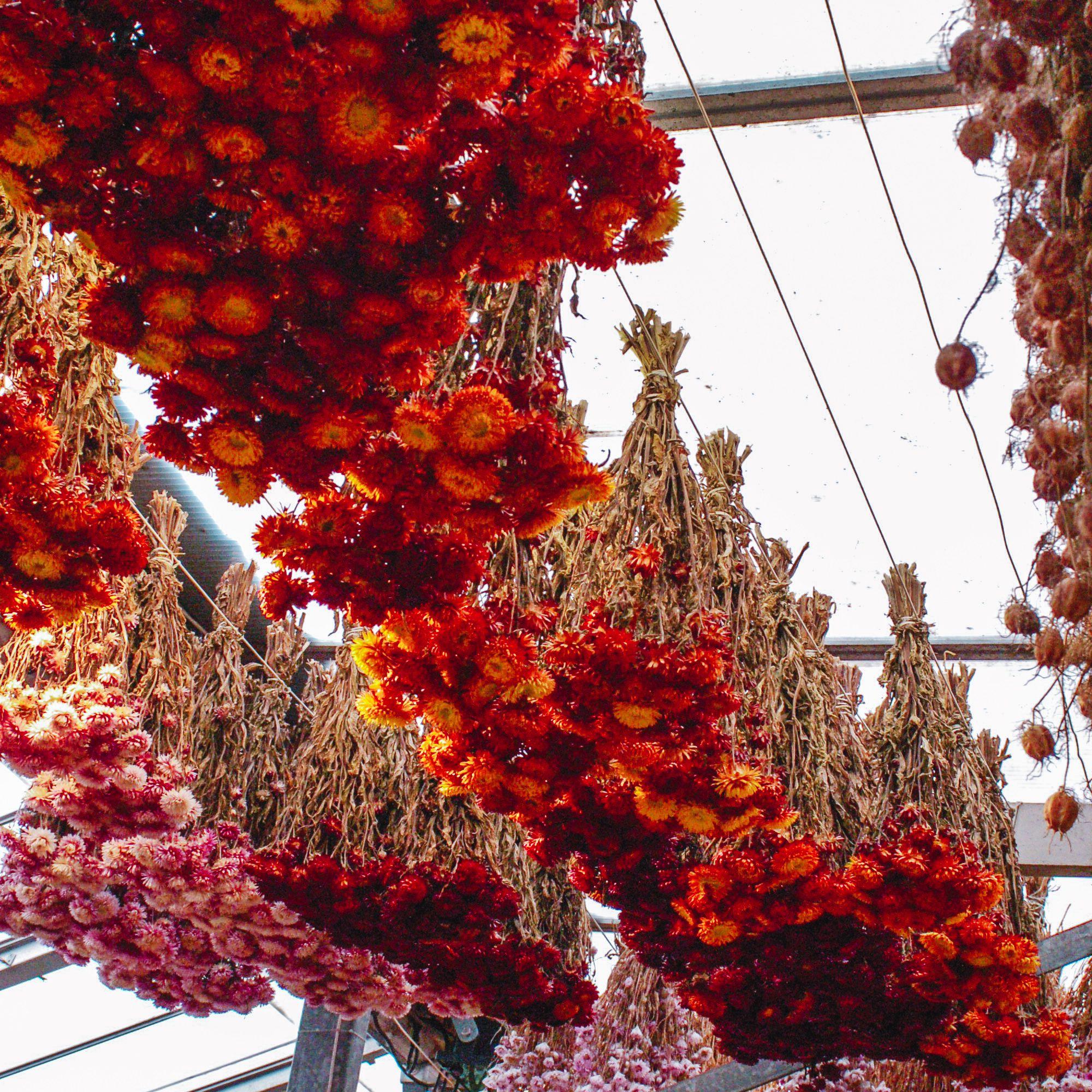 Flores colgando del techo del mercado de flores de Amsterdam