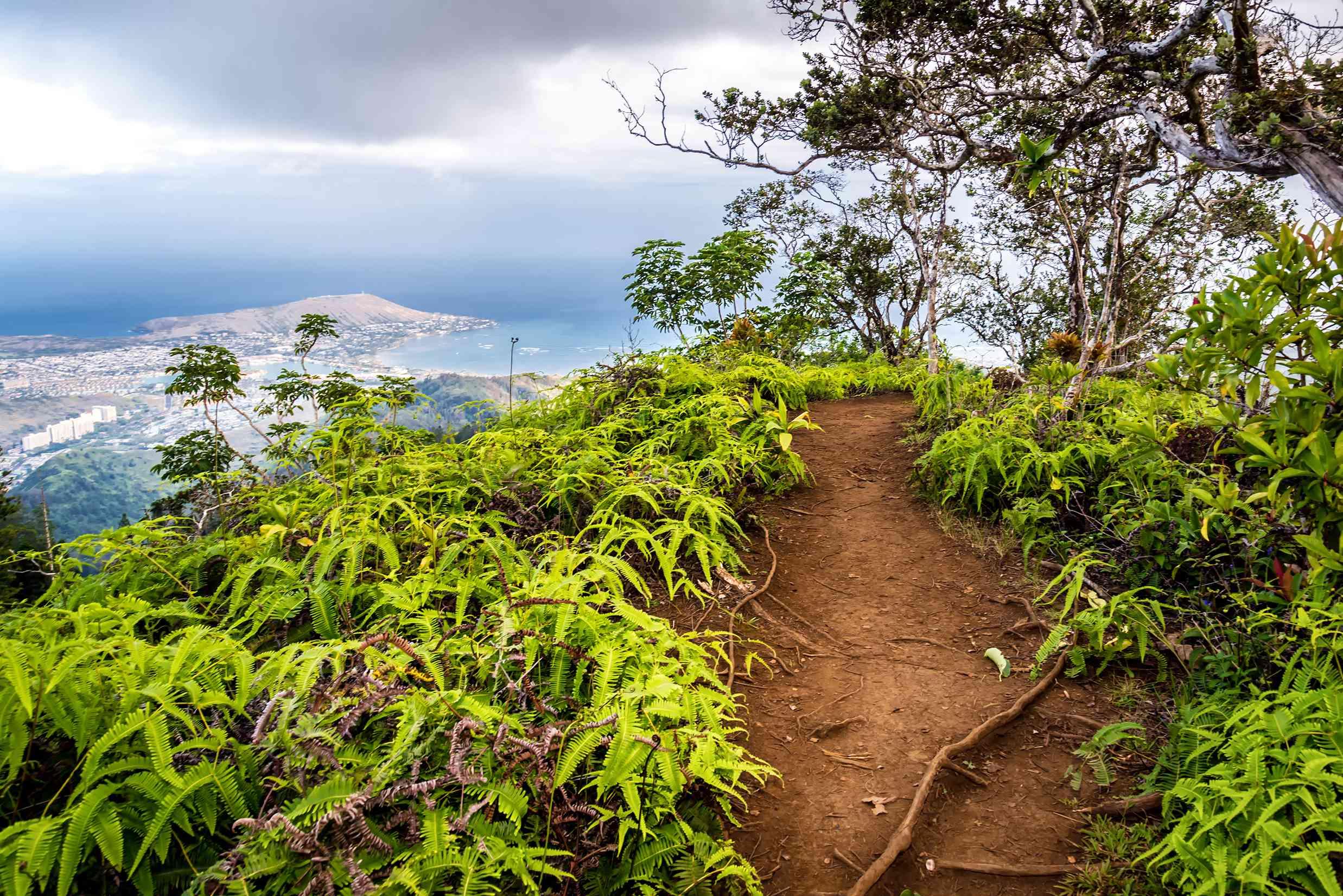 Kuliouou Ridge trail in Hawaii