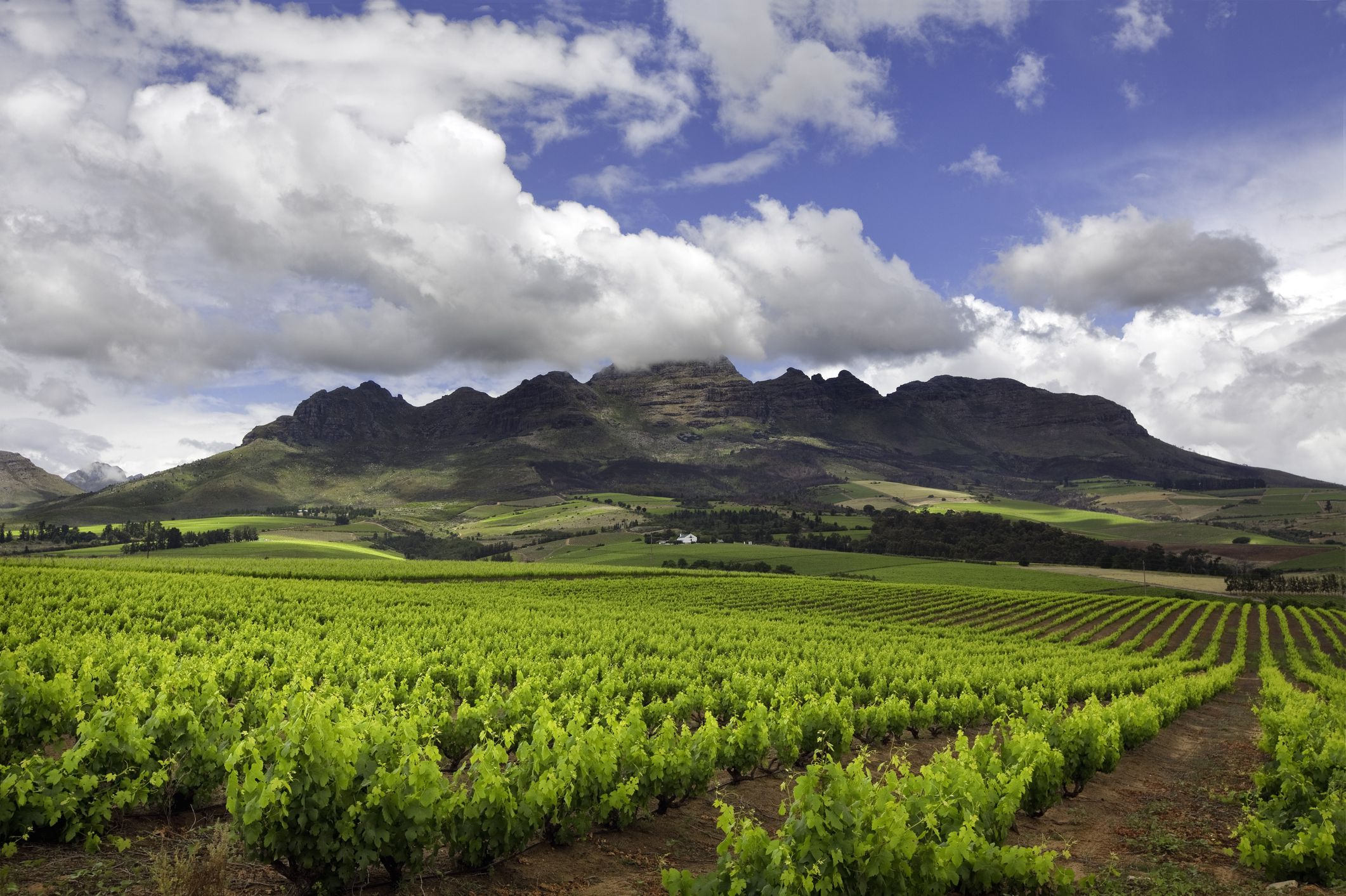 Town And Country Auto >> The Top Stellenbosch Wineries to Visit