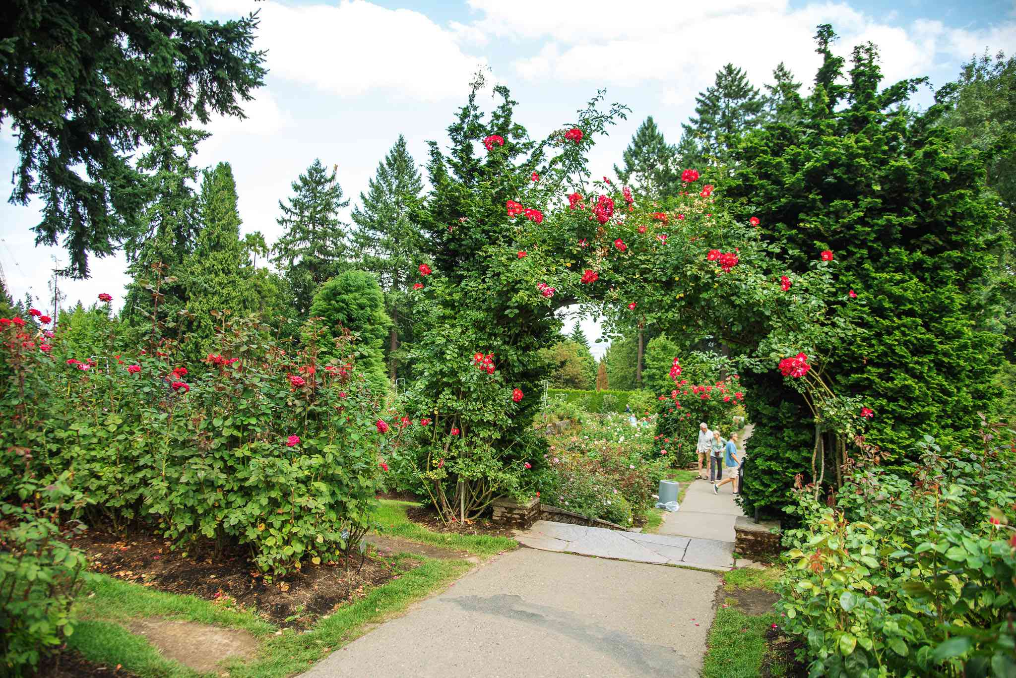 An arch way covered in rose bushes