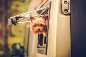 Dog peeking out of RV window