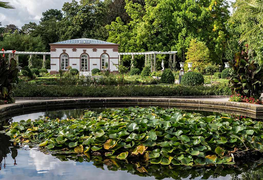 pond in a botanical garden with a cluster of lily pads in the middle