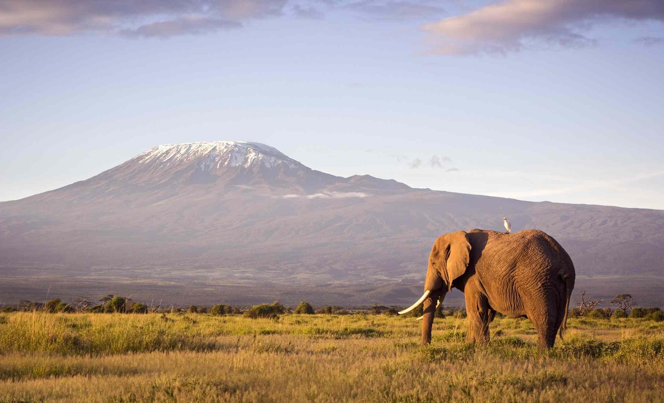 Tusker elephant with Mount Kilimanjaro in the background, Amboseli