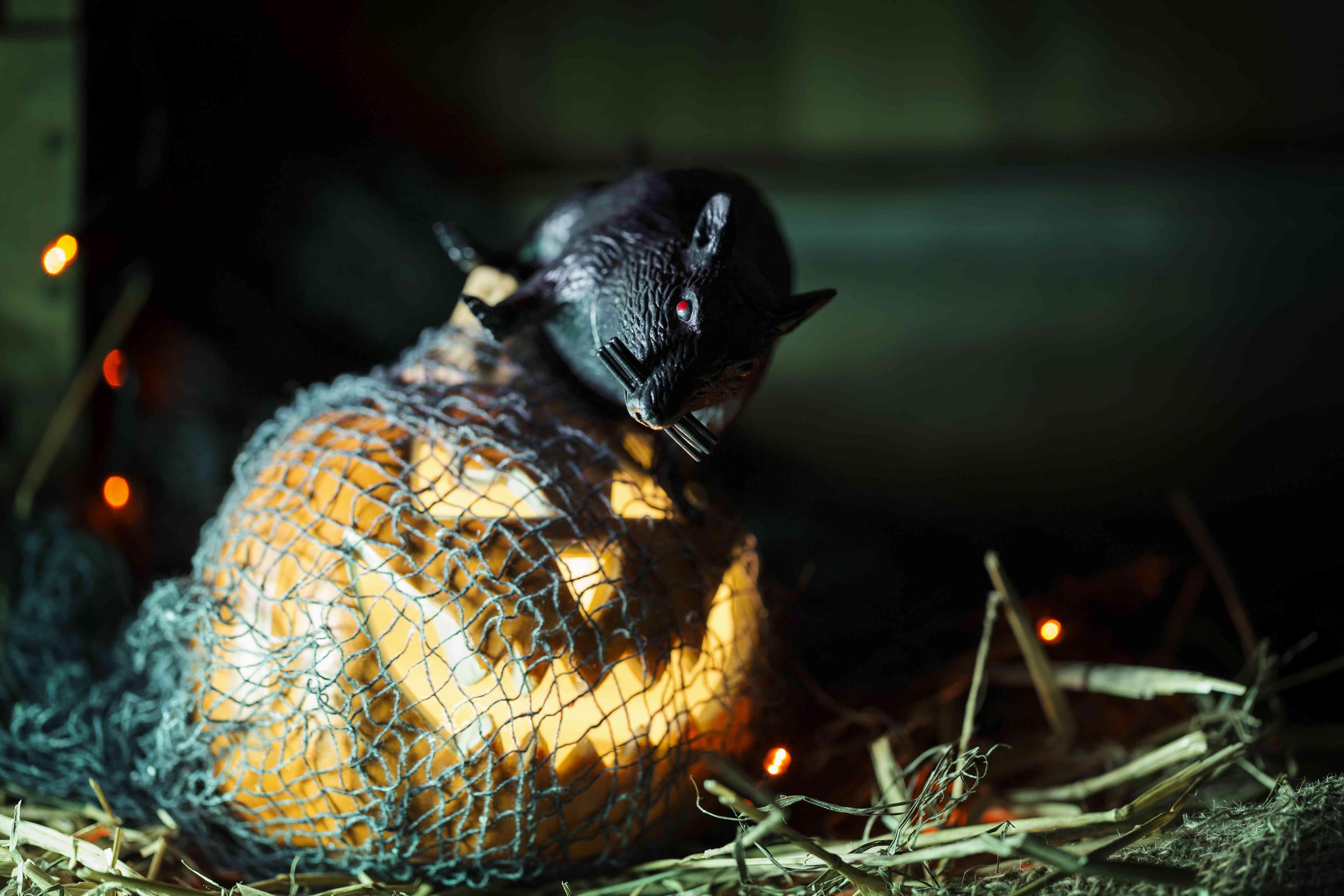 Halloween decoration rat on top of jack-o-lantern