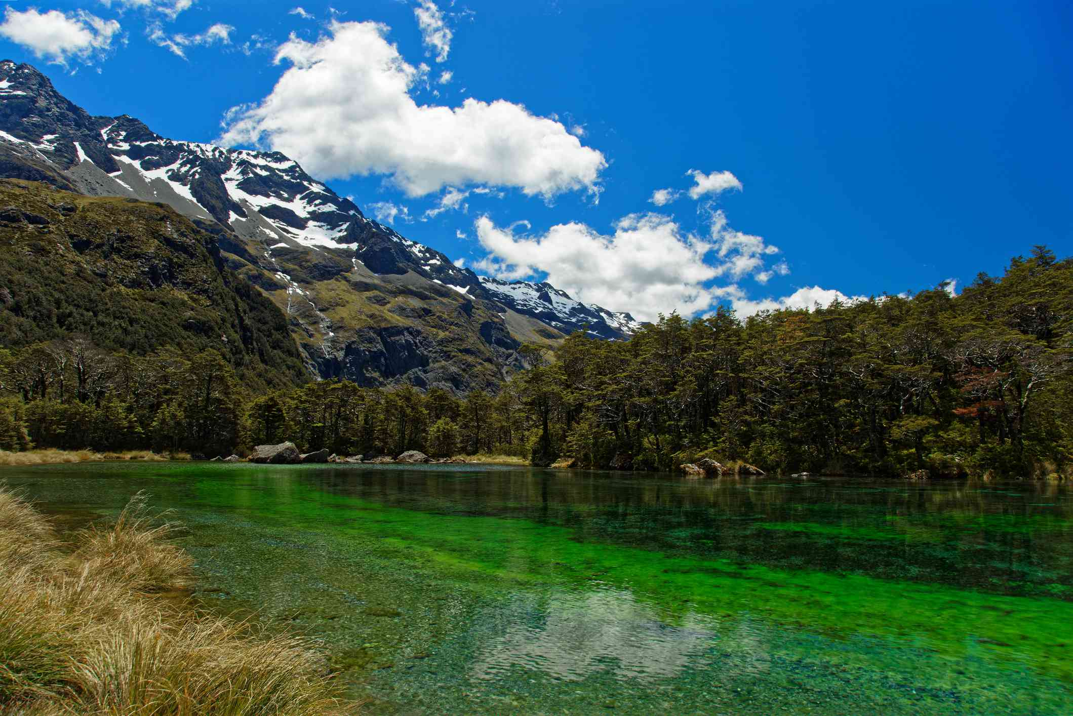 clear green lake surrounded by forest and mountains