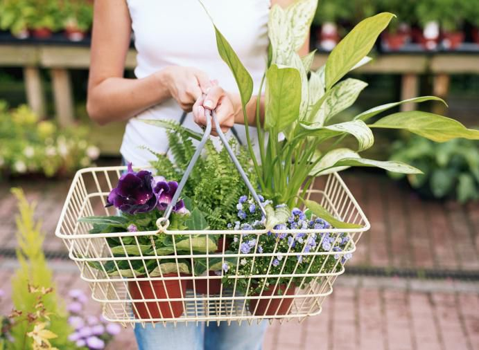 Woman with vrious plants in a shopping basket