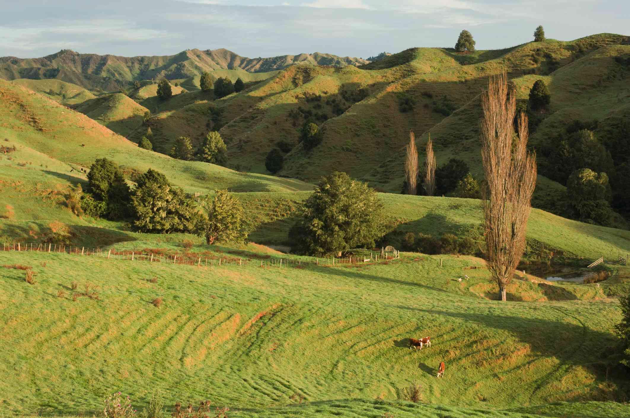 rolling green farmland with a few trees