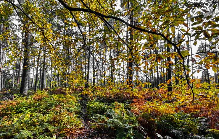 Woodland view of trees and plants in autumn