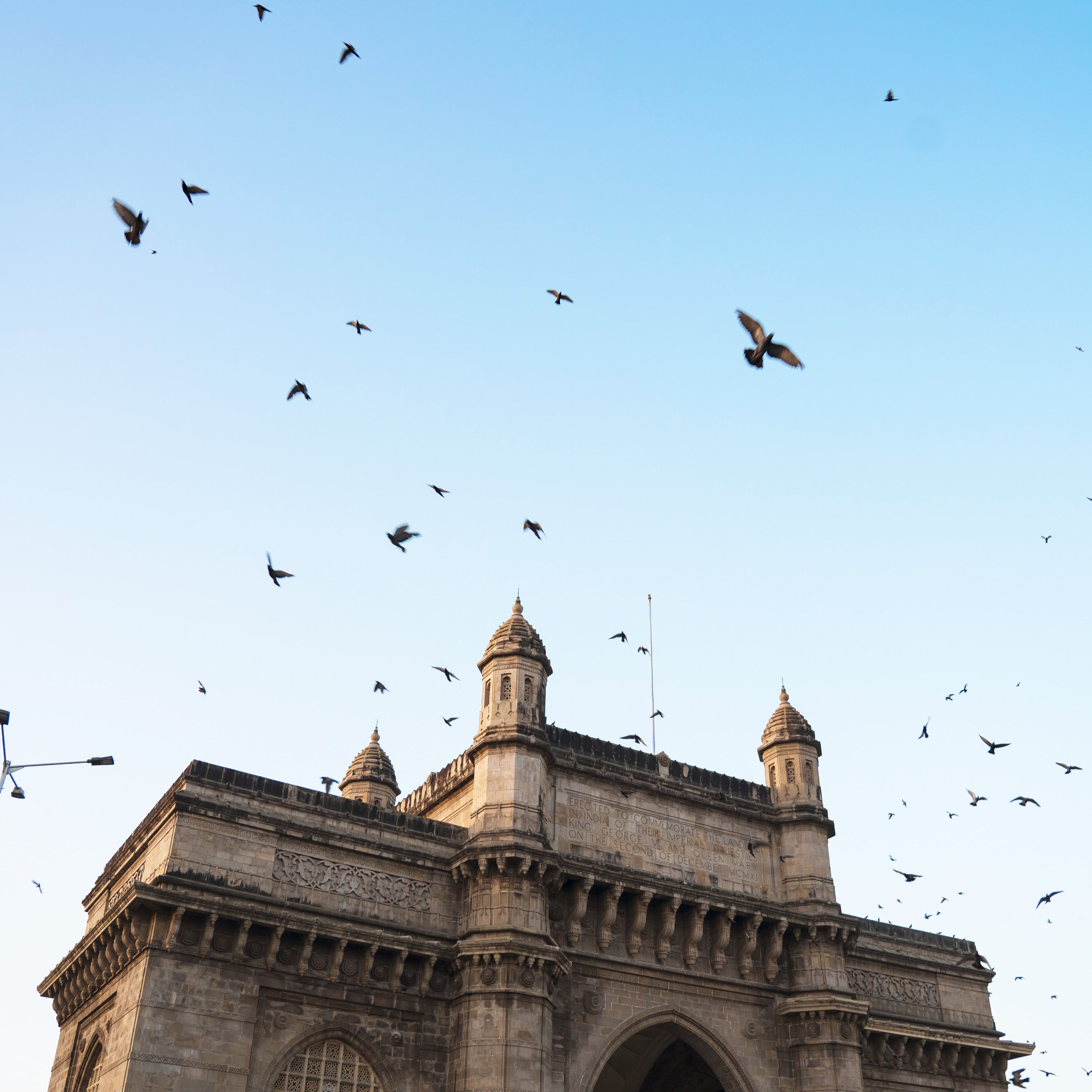 Birds flying over the gate of india