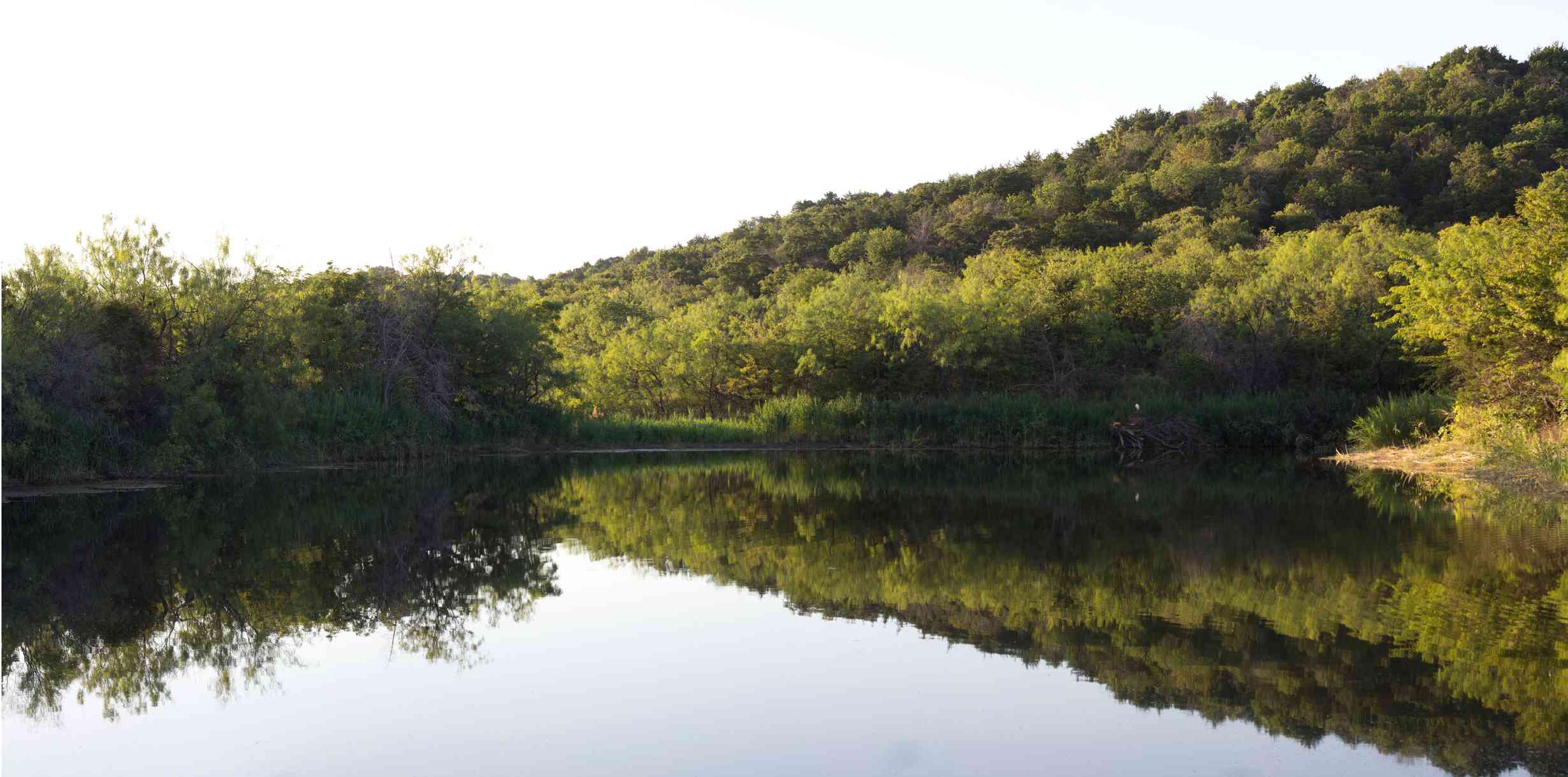 Scenic View Of Lake Amidst Trees Against Clear Sky At Cedar Ridge Preserve