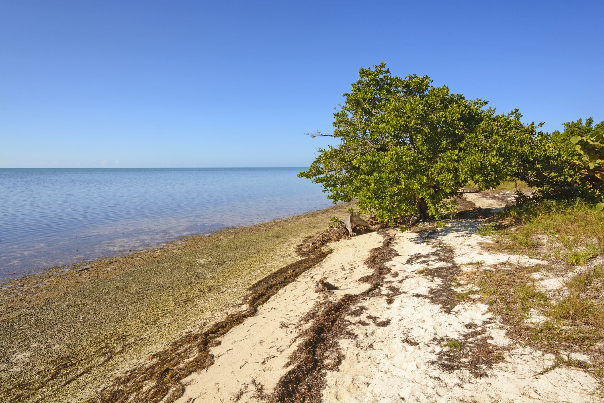 Mangrove and Beach at Low Tide in Long Key State Park