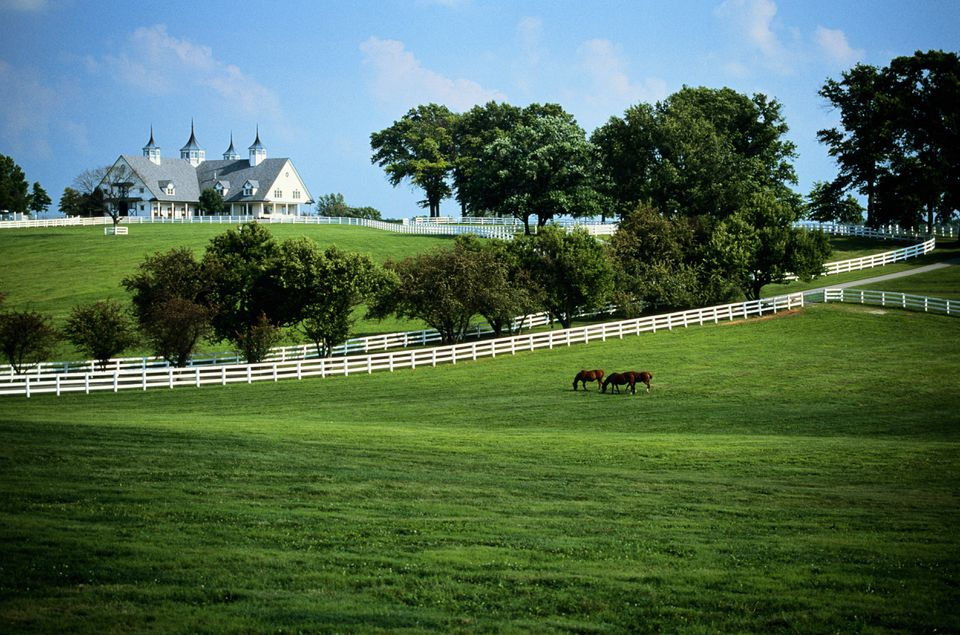 USA, Kentucky, Lexington, horse farm