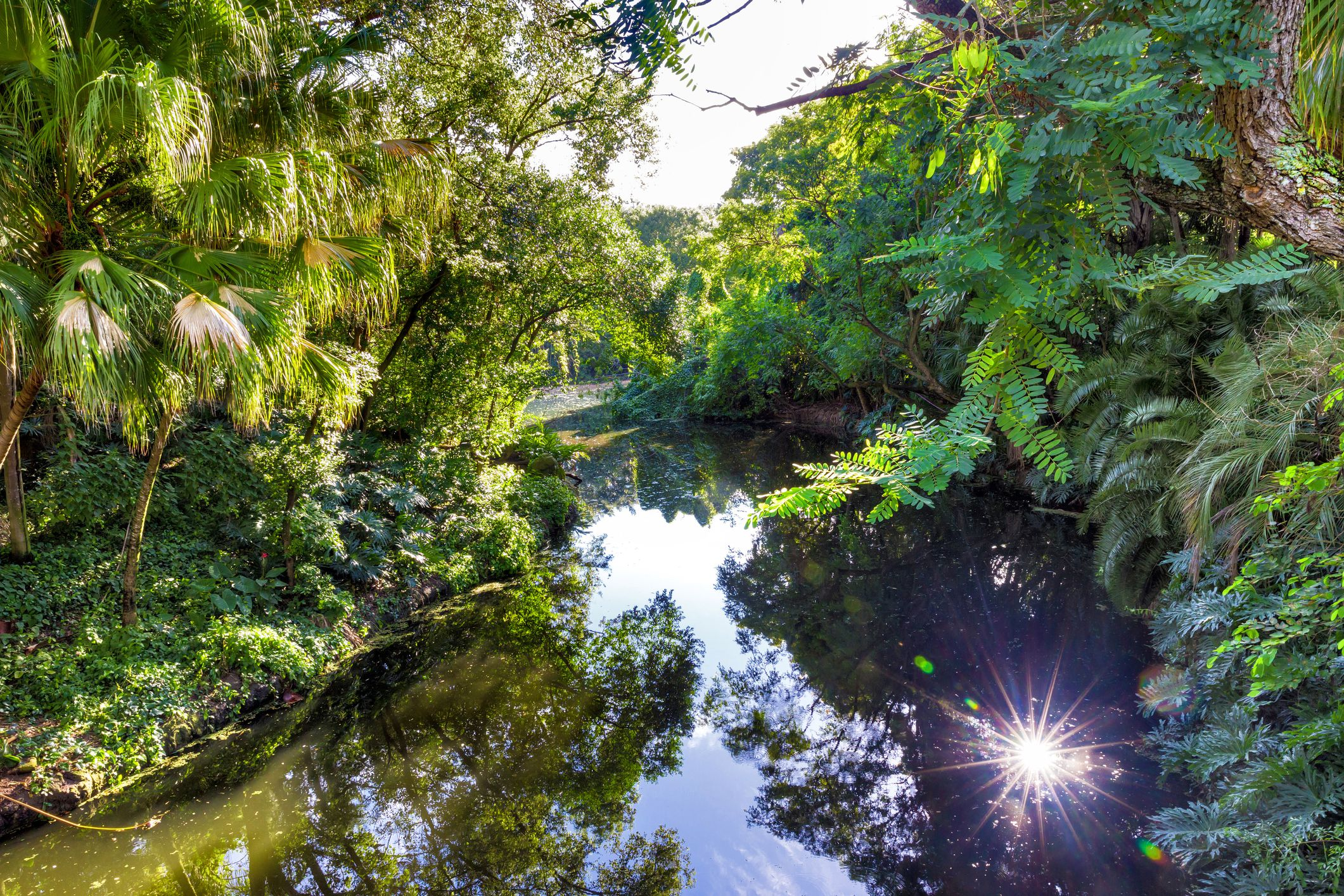 Landscape view of a jungle with a river in a natural environment
